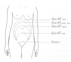 การตั้งครรภ์